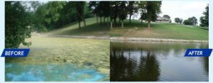 SonicSolutions ultrasonic before and after treatment to control algae